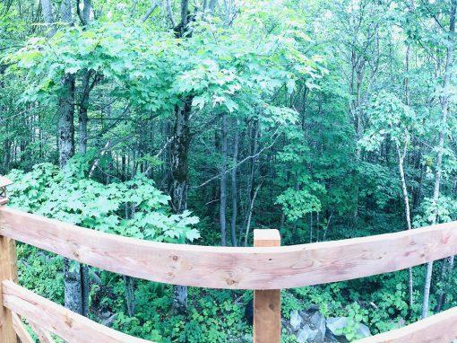 Le p'tit bois – La forêt